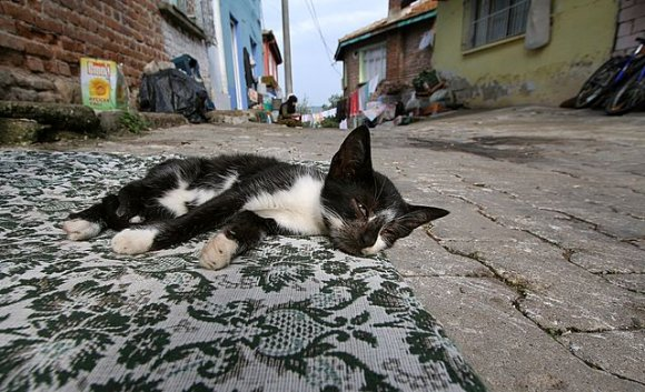 A lazy cat on the street